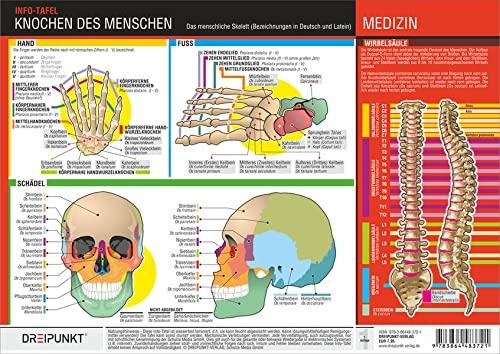 9783864483721: Knochen des Menschen: Die Knochen des menschlichen ...