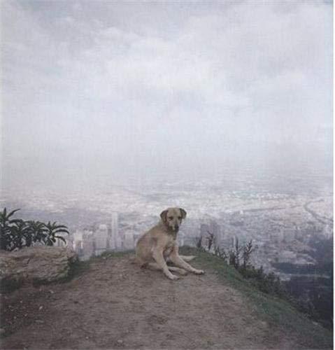 9783865214515: Alec Soth: Dog Days Bogota