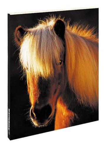 9783865476647: Horse