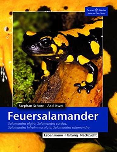 9783866591561: Feuersalamander: Salamandra algira, Salamandra corsica, Salamandra infraimmaculata, Salamandra salamandra