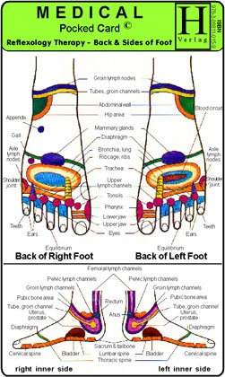9783868110159: Reflexology Therapy - Back & Sides of Foot - Medical Pocket Card