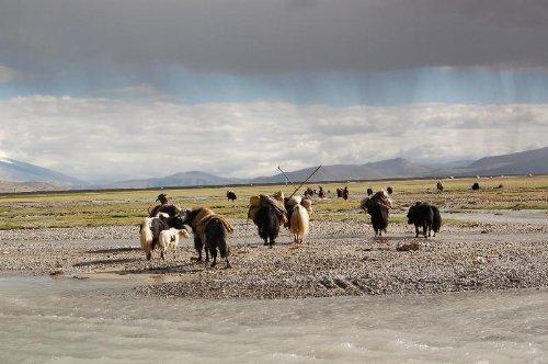 Tibet- Traum und Wirklichkeit. Chinatowns und das Ende der tibetischen Zivilisation - Dieter Schuh
