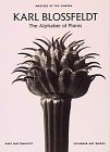 9783888148675: Karl Blossfeldt the Alphabet of Plants (Masters of the Camera) /Anglais