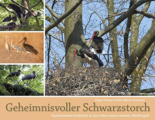 9783891047866: Geheimnisvolle Schwarzstörche: Das beeindruckende Leben eines scheuen Waldvogels