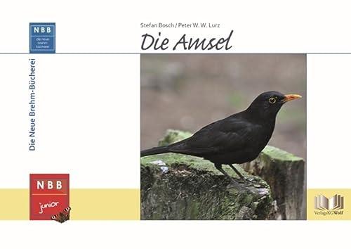 9783894321420: Die Amsel