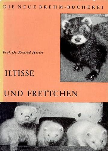 9783894321666: Iltisse und Frettchen