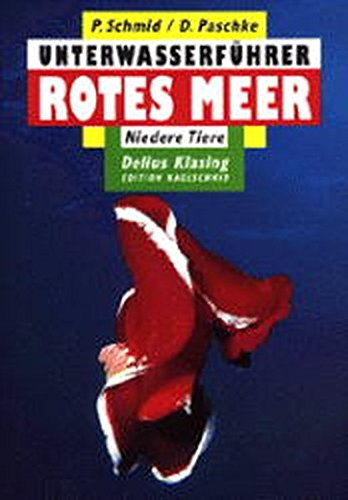 Rotes Meer, Niedere Tiere - Red Sea,