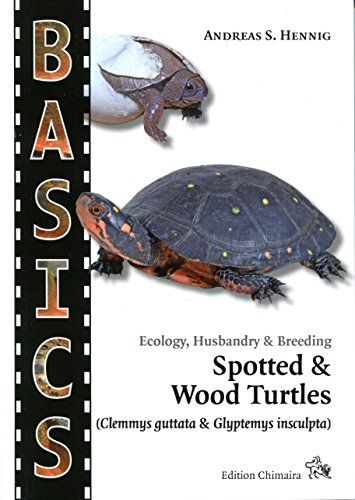 Spotted Turtle and North American Wood Turtle