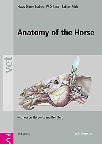 9783899936667: Anatomy of the Horse