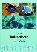 Doktorfische. Lebensweise - Pflege - Arten: Luty, Andre