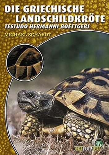 9783937285931: Die Griechische Landschildkröte: Testudo hermanni boettgeri