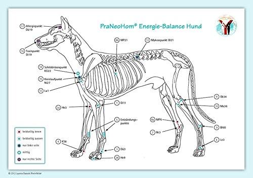 Akupunktur-Tafel Hund: PraNeoHom® Energiebalance durch Heilen mit Zeichen