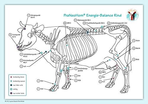 Akupunktur-Tafel Rind/Kuh: PraNeoHom® Energiebalance durch Heilen mit Zeichen: Layena ...