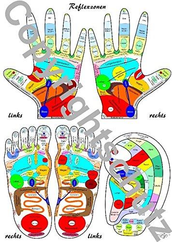 9783940832252: Reflexzonenübersicht - Füße, Hände und Ohr