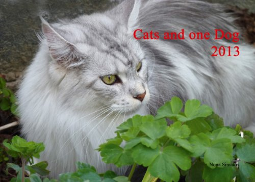 9783941653511: Katzenkalender 2013 - Cats and one Dog