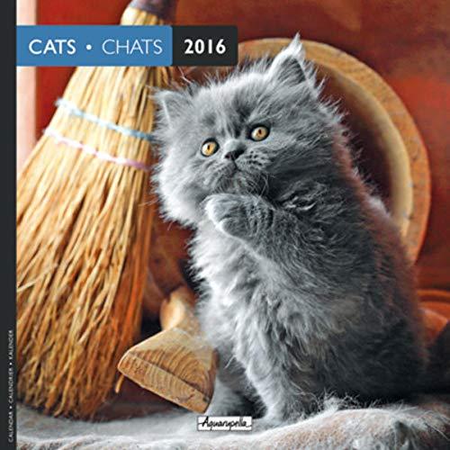 9783943707960: Aquarupella 2016 Chats / Katzen