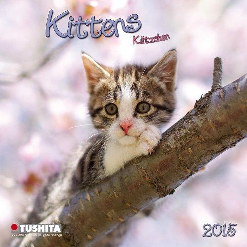 9783955706555: Cats / Kittens (Mini)