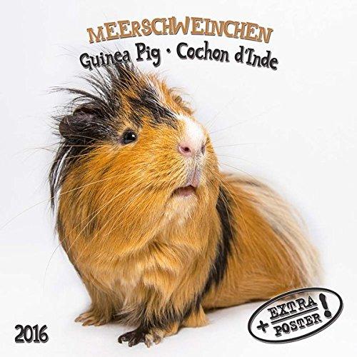 9783955708917: Guinea Pigs