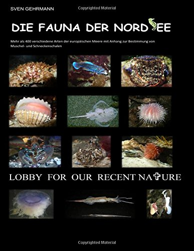 9783981255379: Die Fauna der Nordsee (German Edition)
