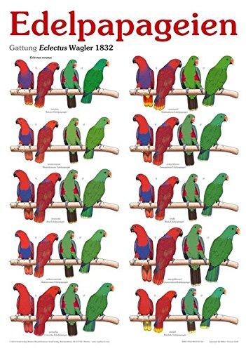 9783981478792: Papageien-Kalender 2014