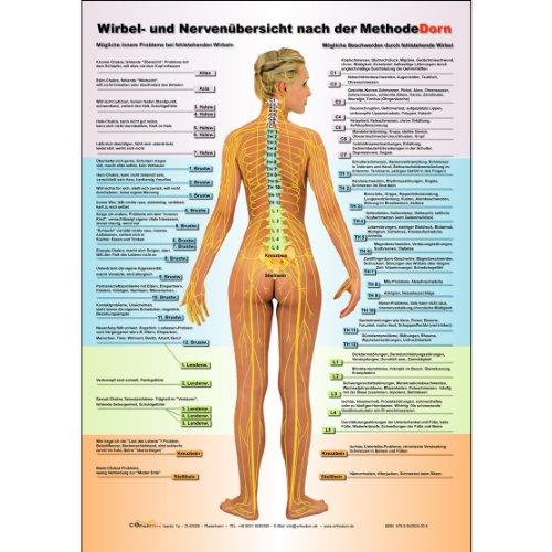 9783981583465: Dorn Methode: Wirbel- und Nervenübersicht nach der Methode Dorn A1