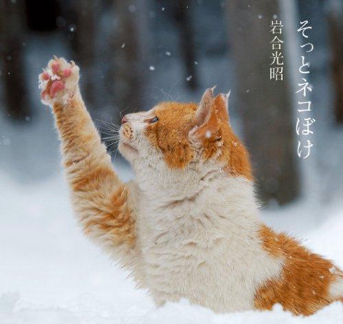 9784096818329: Sotto Nekoboke [In Japanese]