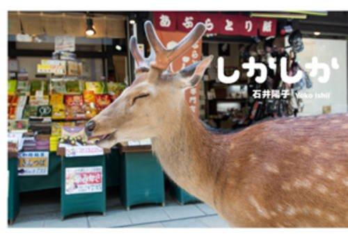 9784898154267: Yoko Ishii - Dear Deer (Japanese Edition)