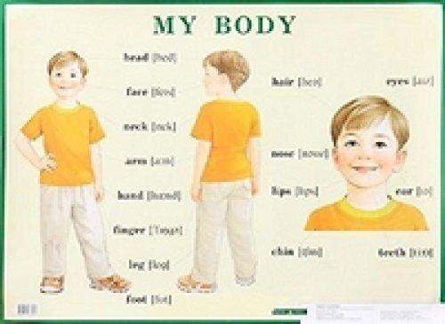 9785811238460: Stroenie tela cheloveka/ My Body. Plakat