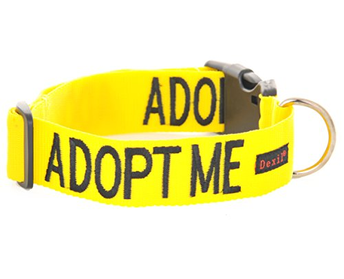 9786041027596: ADOPT ME Yellow Color Coded L-XL Buckle Dog Collar (Needs A Home) Donate To Your Local Charity