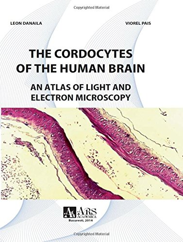 9786068017884: The Cordocytes of the Human Brain. An Atlas of Light and Electron Microscopy