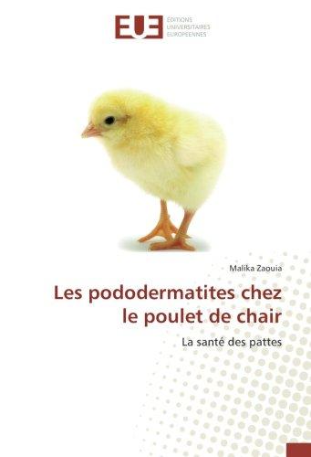 Les pododermatites chez le poulet de chair: Zaouia, Malika