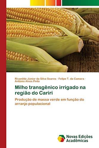 Milho transgênico irrigado na região do Cariri: Rivanildo Júnior da