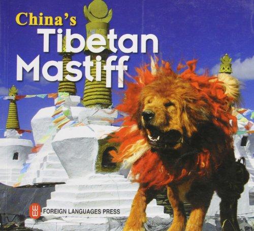 China's Tibetan Mastiff: Ni Pengfei