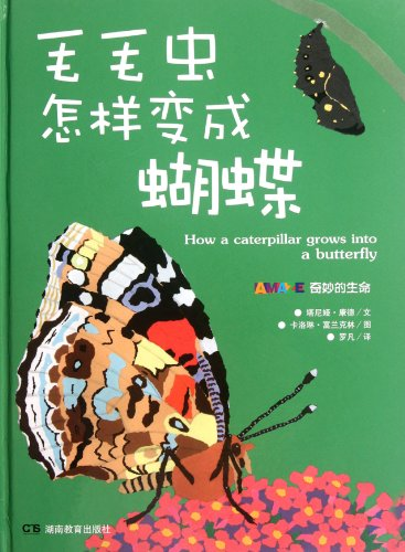 9787535594761: How Does Caterpillar Become Butterfly-Mysterious Life (Chinese Edition)