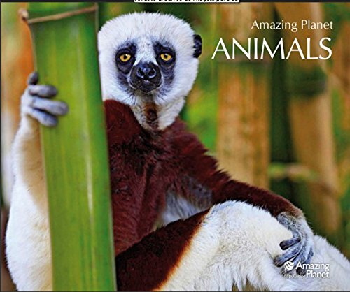 9788055600451: Animals (Spanish Edition)