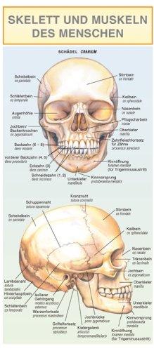 9788085848885: Skelett Und Muskeln Des Menschen