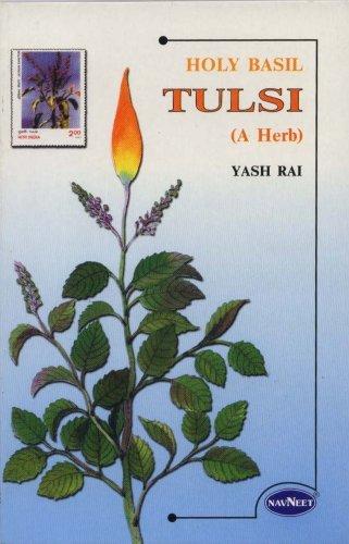 Holy Basil Tulsi a Herb: Yash Rai