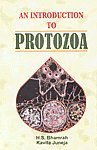 INTRODUCTION TO PROTOZOA-HB: H.S.BHAMRAH