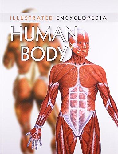 Human Body (Illustrated Encyclopedia): Pegasus