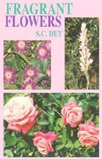 Fragrant Flower: S.C. Dey