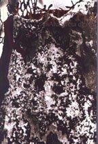 Romtha: Mahasweta Devi: Translated