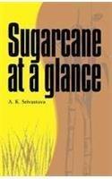 Sugarcane at a Glance: Ashok K Shrivastava