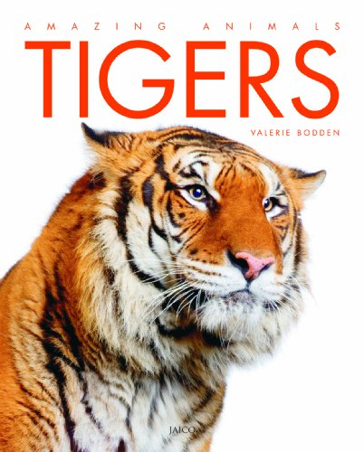 9788184953374: Tigers