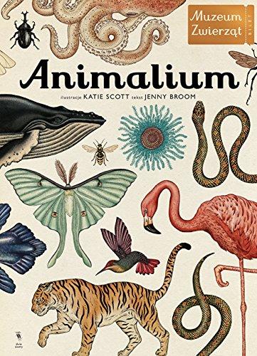 9788363696313: Animalium