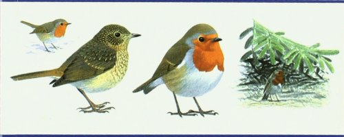 9788428212182: Guia de Aves - Espaa y Europa