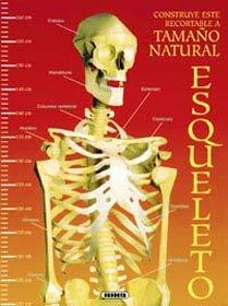 9788430541355: Construye tu esqueleto recortable a tamaño natural