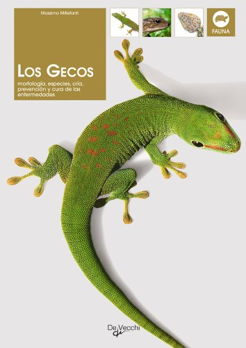 9788431532185: Los Gecos (Spanish Edition)