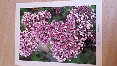 9788492080441: Flora canaria 9
