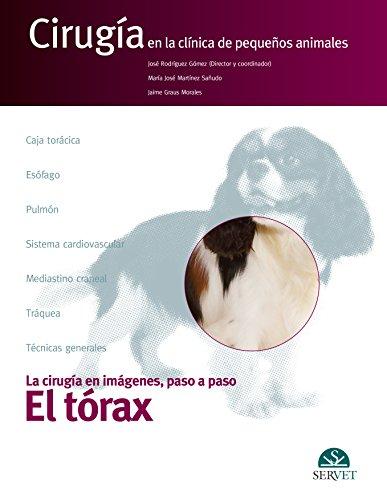 El tórax: Rodríguez Gómez, José