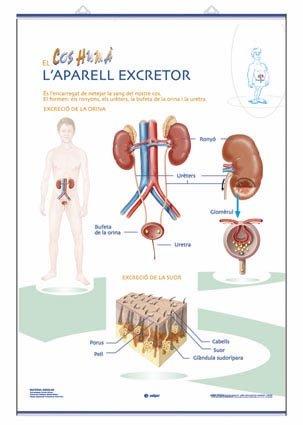9788496961500: Aparell Digestiu / Aparell Excretor: Láminas de Anatomía de Primaria
